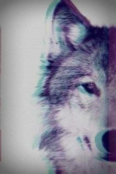 wolf Iphone wallpaper phone background