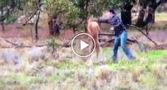 Homem Dá Soco a Canguru Para Salvar O Seu Cão Que Estava a Ser Estrangulado