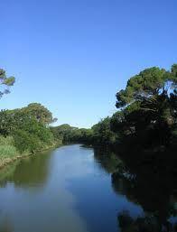 gabbiani nel delta del po - Cerca con Google