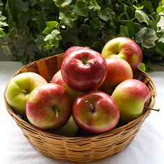 Paula Red Apples have bright red skin with yellow or tan highlights. Inside, the creamy-white flesh is firm, finely-textured, crisp and juicy.    Though sweeter than McIntosh apples, there is also a bit of tartness. http://www.cooksinfo.com/paula-red-apple