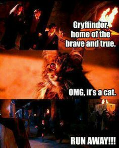 Harry Potter Edit