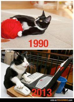 Evolución del juego de los gatos