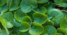 Outdoor Plants, Garden Plants, Night Garden, Outside Living, Evergreen, White Flowers, Scandinavian, Plant Leaves, Garden Ideas