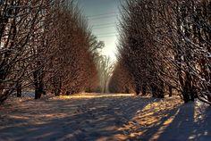 Inverno, Mariano, Lombardy, Italy   da forastico su Flickr  {collected by Via Optimae, www.viaoptimae.com}