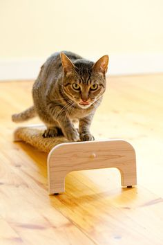We love our sisal scratchers! Natural Maple Incline Cat Scratcher with by MountainCatTrees, $42.99