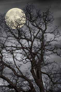 Fabulous photo of a full moon hiding behind the branches of a tree top. For more moon photography, see these amazing moon galleries. Moon Moon, Moon Art, Shoot The Moon, Moon Shadow, Moon Photos, Full Moon Pictures, Moon Photography, Photography Tips, Wedding Photography