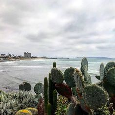 Don't be a prick  (hehe) #lajollalocals #lajolla #pacificbeach #surf #lajollalocals #sandiegoconnection #sdlocals - posted by La Jolla Locals  https://www.instagram.com/lajollalocals. See more post on La Jolla at http://LaJollaLocals.com
