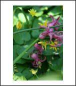 image 23154 @openphoto.net.net
