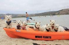 WROC Floats