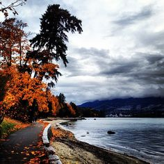 Stanley Park in the Fall - Photo by morgananana_