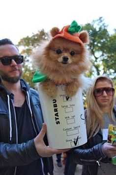 Pumpkin Spice Latte | 16 Adorable Pets Who Dressed Up As Food For Halloween I'll take this late to go!! Adorable!! :D
