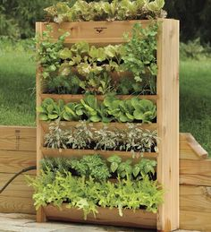 Red Cedar Vertical Garden with Irrigation System