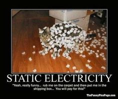 Static Electricty LOL Catz Meme Funny Cat