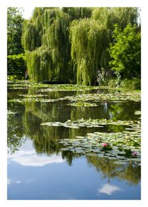 Monet's waterlily garden at Giverny