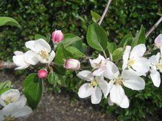 Aroma - epletre