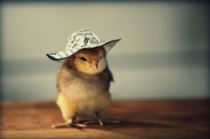 Chick with a hat