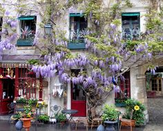 Find the bird in the wisteria vine...  Nothing like a vine to add interest and charm to the architecture