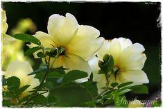 Suvikumpu Garden, Flowers, Plants, Garten, Florals, Gardens, Planters, Flower, Blossoms