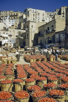 Baskets filled with tomatoes stand in rows in piazza - Sicily, Italy