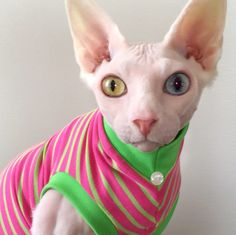"""Gorgeous pique cotton knit stripe fabric! Very lightly textured--it feels like your favorite polo shirt! All dressed up with no where to go! Your cat will love being the """"Fashionista"""", and you will lo"""