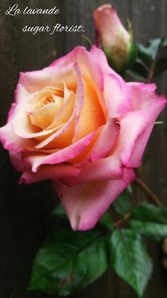 Summer garden rose.  - Cake by La Lavande Sugar Florist
