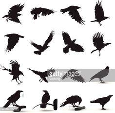 Raven Silhouette Tattoos for Women Silhouette Tattoos, Bird Silhouette, Silhouette Vector, Art And Illustration, Stock Illustrations, Kunst Tattoos, Body Art Tattoos, Fox Tattoos, Phoenix Tattoos