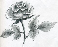 Как нарисовать красивую розу карандашом