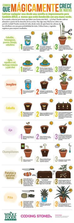 Gardening: Grow Vegetable Plants from Kitchen Scraps! Easy Gardening: Growing Vegetables Plants from Kitchen Scraps!Easy Gardening: Growing Vegetables Plants from Kitchen Scraps! Organic Gardening, Gardening Tips, Indoor Gardening, Urban Gardening, Outdoor Gardens, Hydroponic Gardening, Small Gardens, Gardening In An Apartment, Apartment Plants