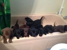 """""""My friend's dog had 14 puppies. This is how they're kept out of trouble while she cleans the house."""" Sooooooo cute!"""