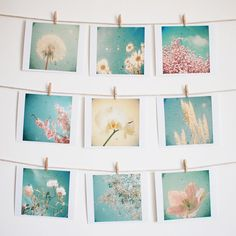 Nature Photography, Spring Flowers, Pastel Colours, Photograph Collection, Blue, Cream and Pink, Dreamy, Floral - Garden