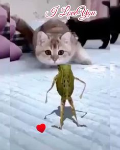 Funny Prank Videos, Funny Songs, Funny Short Videos, Funny Animal Videos, Funny Animals, Merry Christmas Gif, Christmas Scenery, Funny Cartoon Pictures, Funny Photos