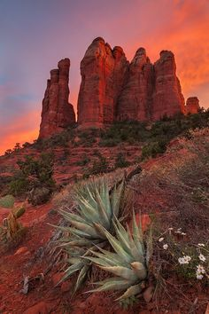 Warm light bathes the iconic Cathedral Rocks formation in Sedona, Arizona
