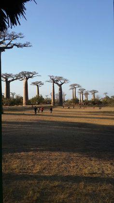 Baobab street, Madagascar