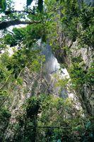En la profundidad de las grietas que separan los bloques de roca de Chiribiquete, aún hay suficiente luz para el desarrollo de la vegetación...