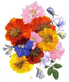 How to create pressed flowers to use on cards and other craft projects!