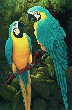 Artist Rising is the premier destination for discovering original art, fine art and photography prints, and limited edition art by living artists. Bird Drawings, Art Drawings Sketches, Animal Drawings, Bird Pictures, Watercolor Bird, Animal Paintings, Bird Art, Beautiful Birds, Pet Birds