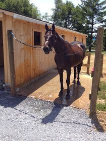 Building & Managing the Small Horse Farm: Outdoor Wash Rack Design Horse Paddock, Horse Arena, Barn Stalls, Horse Stalls, Small Horse Barns, Horse Barn Designs, Horse Barn Plans, Horse Barn Decor, Horse Shelter