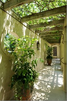 such a gorgeous use of overhead arbor.  Lovely inner courtyard or side yard in a small space.