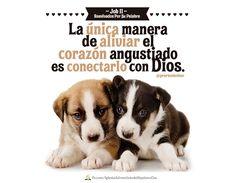#biblia #rpsp #job