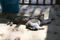 Mikey & Opal enjoying the sunshine on their Catio