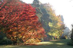 Westonbirt Arboretum in all its autumnal beauty