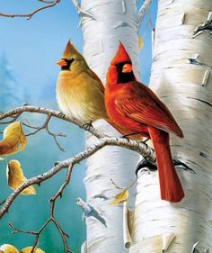 Large Size Hautman Songbirds: Cardinals and Birch 300 Pieces Jigsaw Puzzle Bird Pictures, Pictures To Paint, Pretty Birds, Beautiful Birds, Beautiful Artwork, Watercolor Bird, Watercolor Paintings, Cardinal Birds, Tier Fotos