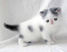 The fluffiest kitten.