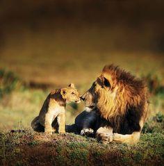 Photo: Lions