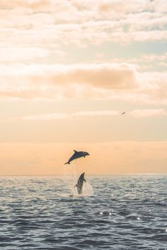 Dolphin Photos, Dolphin Art, Water Background, Background Pictures, Ocean Turtle, Pretty Landscapes, Underwater Animals, Beautiful Sea Creatures, Ocean Wallpaper