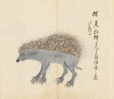 Investigation of medicinal plants, birds and wild animals in Korea in the Yedo era (Soke collection), Edo period, 1721-31. Historiographical Institute. #UTokyoResearch
