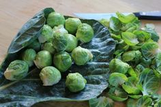 How to Grow Brussels Sprouts {Start to Finish} on $100 A Month at http://www.onehundreddollarsamonth.com/how-to-grow-brussels-sprouts-start-to-finish/