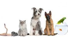 economia colaborativa con lirio, compartir mascotas