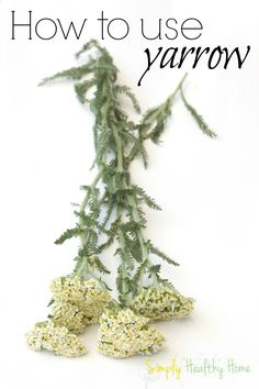 How to use yarrow - Simply Healthy Home