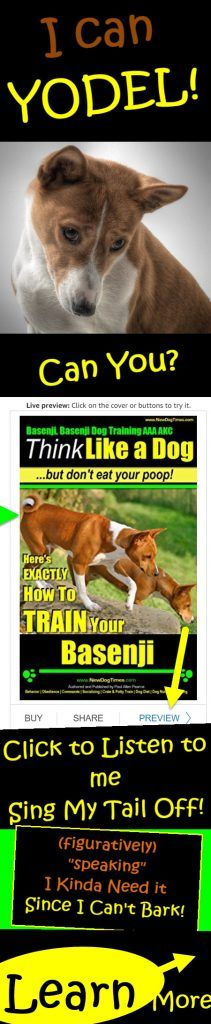 Awesome Dog Fact Basenji dogs have an awesome dog fact. Did you know Basenji dogs are not from Switzerland? True, but they Sure Can Yodel like its no. Basenji Dogs, Dog Breeds List, Female Hormones, Dog Facts, Best Dogs, Did You Know, I Can, Weird, Hilarious